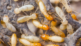 Natural Pest Control Gold Coast | Termite Treatments